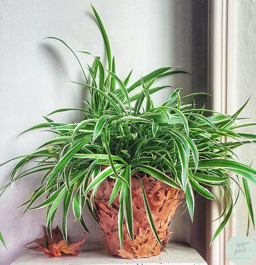 Allestire casa con un vaso di foglie